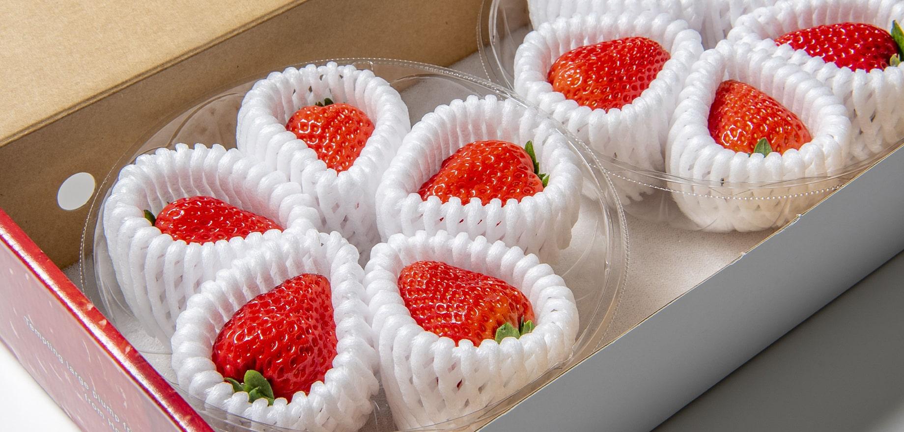 イチゴ事業